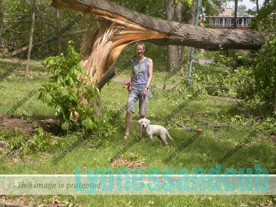girl and dog at snapped tree after storm